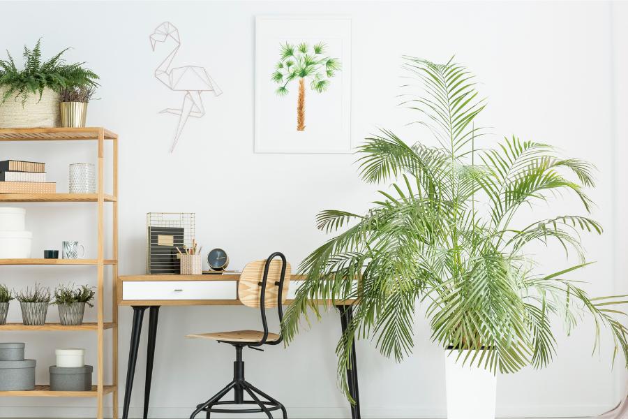 Best Indoor Plants to Make Your Office Greener – Literally
