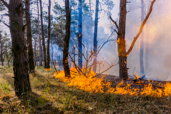 Wildfire Season: Forestry Impact